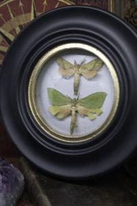 Cadre Sorcière à papillons Australie
