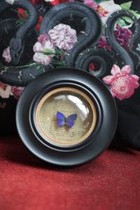 Cadre Sorcière à papillon Arhopala