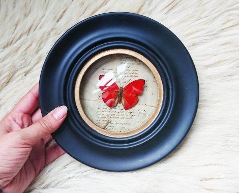 papillon sous cadre rond vintage cabinet de curiosité